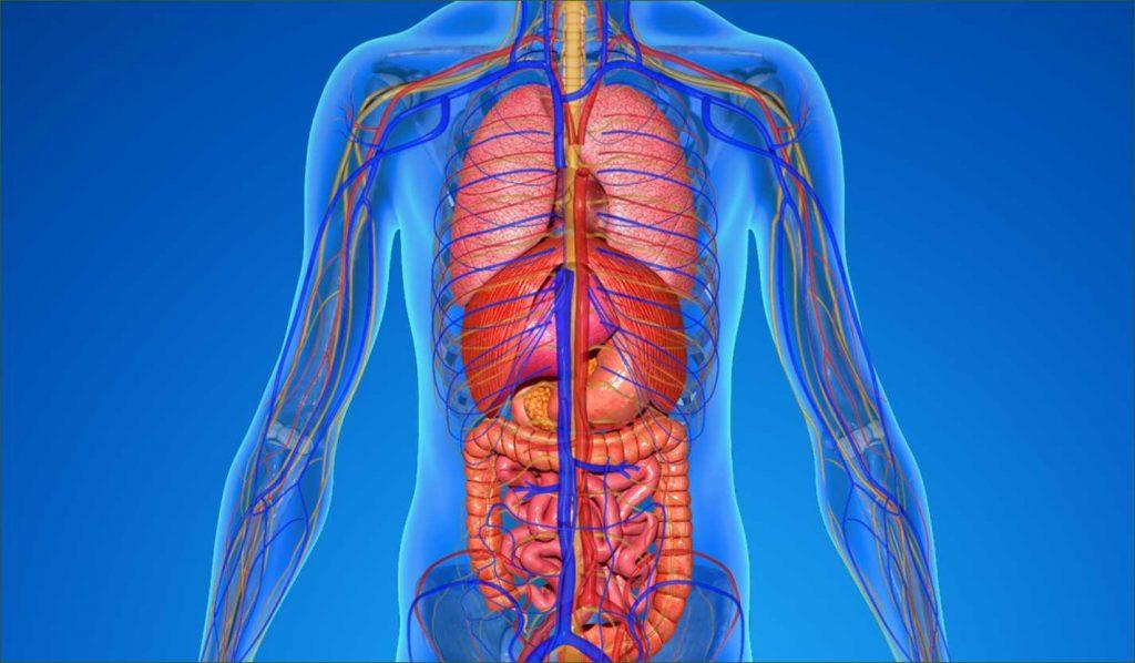 body health tips