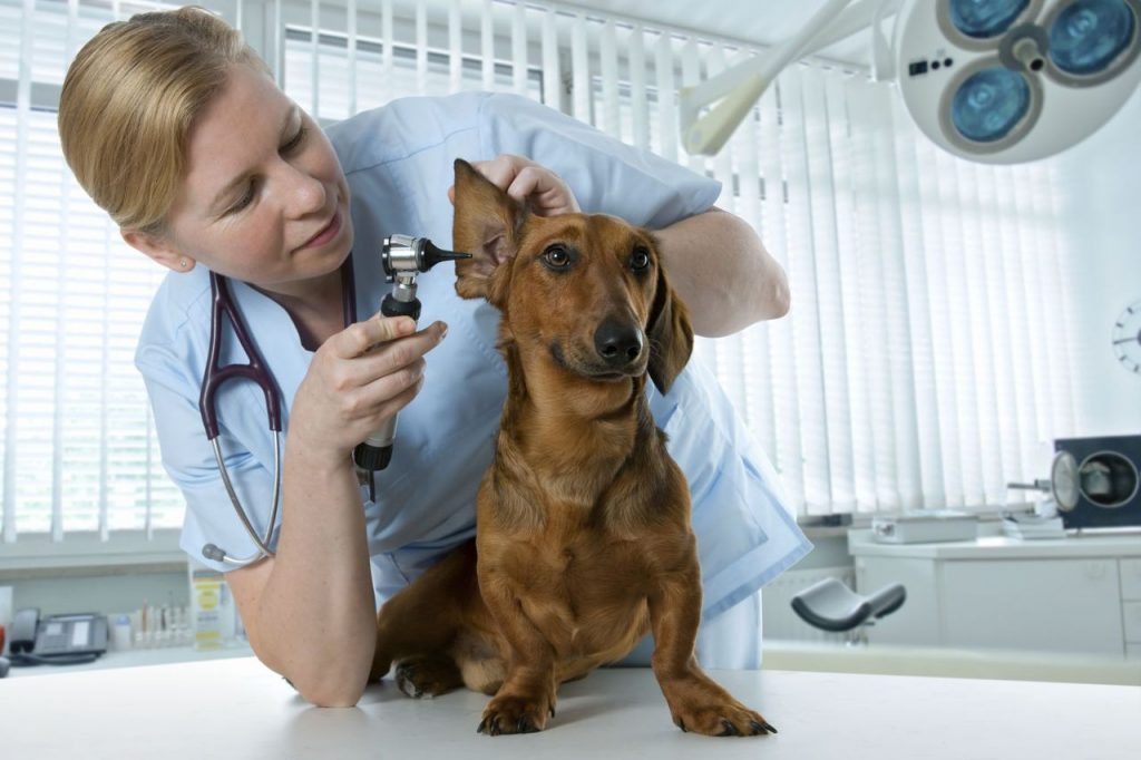 veterinary clinic services
