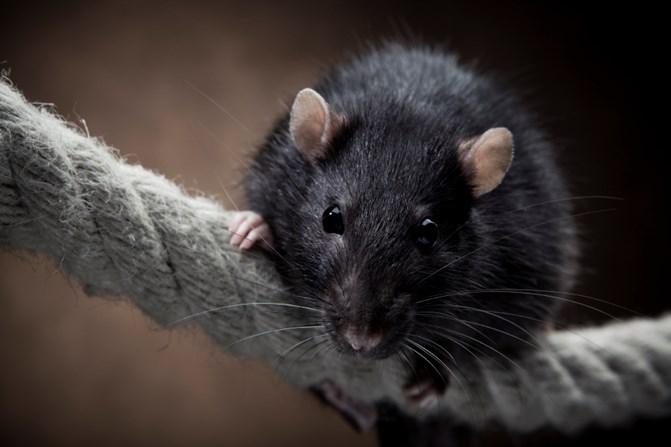 Mouse Traps